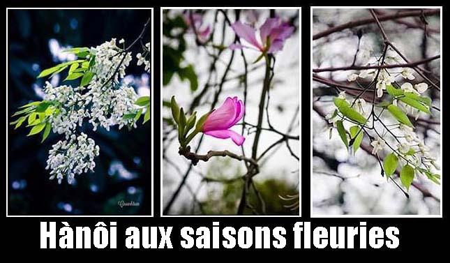 hanoi_saisons_fleuries