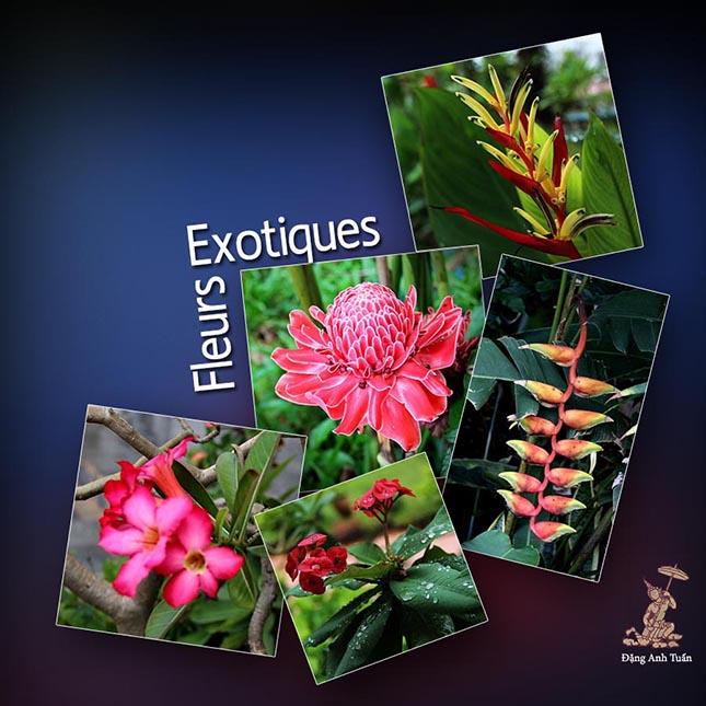 fleurs_tropicales