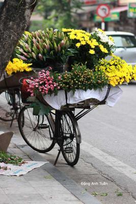 Hanoi 2-439