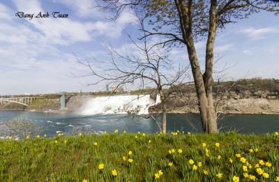 Niagara 1393