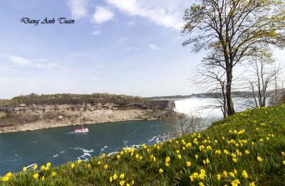 Niagara 1399