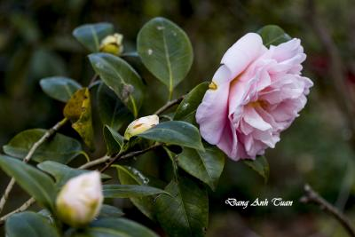 fleur 0189