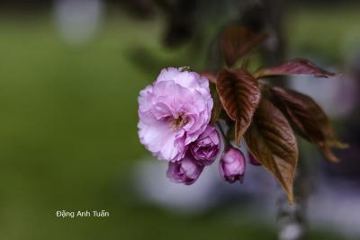 fleur 4562