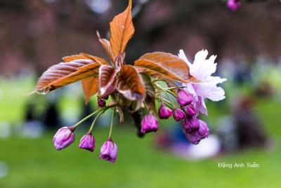 fleur 4600