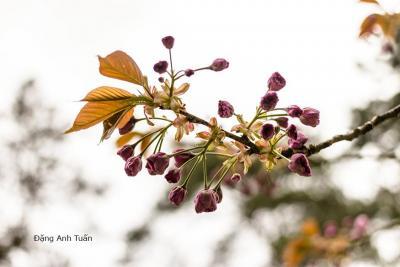 fleur 4616