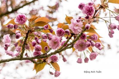 fleur 4619