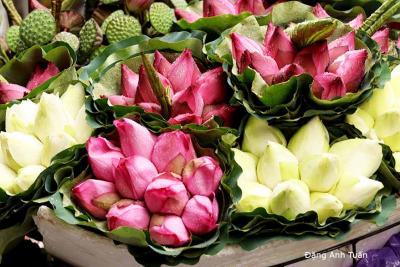 fleur 6302