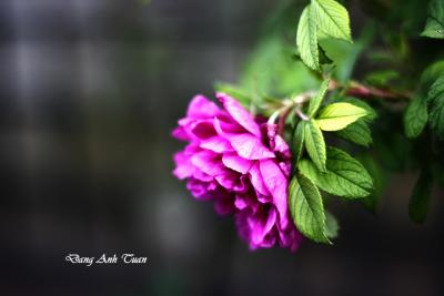 fleur 6909