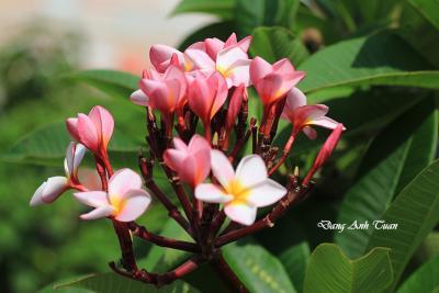 fleur 7295