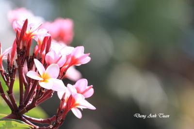 fleur 7326