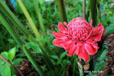fleur 8014