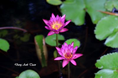 fleur 8539