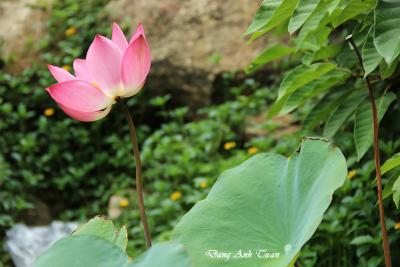 fleur 9529